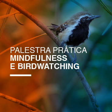 mindfulness-e-birdwatching